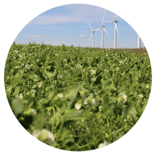 pea-field-turbine-4-circle